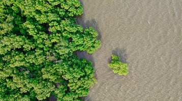 birds eye image of mangrove trees and river